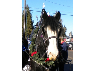Wrangler at the Sisters Christmas parade